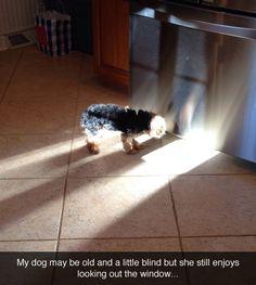 Poor thing