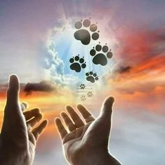 Ich vermisse dich I miss you frases Memorial Poems, Dog Memorial, Tatuagem The Rock, Animals And Pets, Cute Animals, Losing Your Best Friend, Miss My Dog, Pet Loss Grief, Pet Remembrance