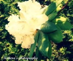Katiera's photography