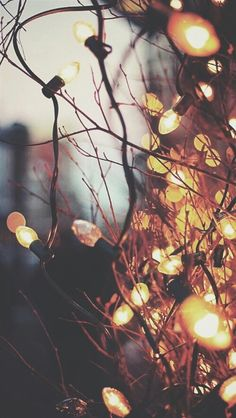 Inspiração | we ♥it | Pinterest | Fairy lights, Tim o'brien and Fairies