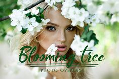 46 Blooming tree photo overlays PNG overlays flowers
