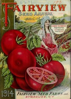 seeds_catalogs-06086 - 064-Tomato, Woman holding tomatoes in dress [2678x3698] - 17th commercial lithographs royalty books digital old  botanical paintings Artscult ornaments scan ArtsCult.com picture transfer public pre-1923 Paper vintage century 18th scrapbooking ArtsCult illustration qulity Victorian blooming 1900s botany natural collage craft pack plants domain Pictorial free supplies 1800s 300 dpi instant nice Edwardian fabric naturalist high download Graphic flower beautiful 1700s use…