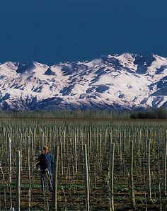 Wine country Mendoza Argentina
