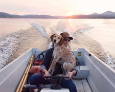 Maddie the dog, of 'Maddie on Things' fame, is traveling across America with owner Theron Humphrey