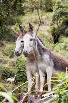 Donkey duo   von 10b travelling