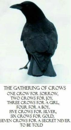 The Gathering of the Crows  ╰☆╮skymomma╰☆╮.. I saw a gathering of like 50 on my daily walk this morning