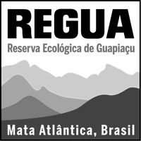 REGUA (Reserva Ecológica de Guapi Assu) works with WLT to protect the Atlantic Rainforest in Brazil