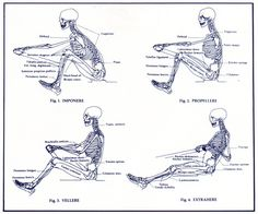 When you're a rower and a medical student and this is how you view the world The anatomy of the rowing stroke Rowing Workout, Workout Gear, No Equipment Workout, Row Row Your Boat, The Row, Erg Rowing, Rowing Oars, Rowing Photography, Olympic Rowing