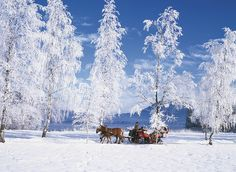 Experience the winter wonderland in Ramsau am Dachstein on this tour from Salzburg. Pass by the snow-covered forests and meadows on a horse-drawn sleigh ride, discover romantic places on a short walk, and enjoy a delicious lunch. Winter Wallpaper Desktop, Cool Desktop, Desktop Backgrounds, Best Nature Wallpapers, Winter Szenen, Winter Holiday, Winter Time, Christmas Horses, Nature Artwork