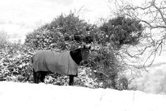 'Snow Pony'... on the Little Sugar Loaf Mountain, Kilmacanogue Village, County Wicklow, Ireland.