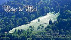Narcisse! Exposition photographique du 30 mai au 1er juin 2014, au LoftA46 à Montreux. 30 Mai, Narcisse, Switzerland, Snow, Mountains, Nature, Travel, Art, Radiation Exposure