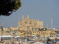 View of Palma Cathedral from the marina