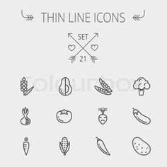 Stock vector of 'Food and drink thin line icon set for web and mobile. Set includes- beans, eggplant, potato, cauliflower, turnip, corn, avocado, carrot icons. Modern minimalistic flat design. Vector dark grey icon on light grey background.'