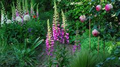 Have a look at some of the wonderful home garden photos that you have been sending in.