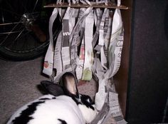 Newspaper hanging strips for ripping down, shredding, and running through