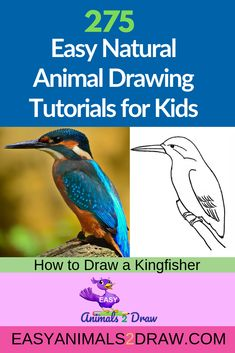 Learn how to draw an amazing Kingfisher with this easy and inspirational step-by-step drawing tutorial for kids of all ages! Start by drawing the head. Draw a curved line in graphite pencil. to draw animals tutorials birds step by step