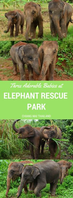 At Elephant Rescue P