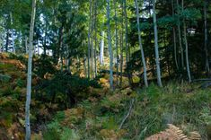 1. Aspen Nature Loop Aspen, Arizona, Hiking, Camping, Fire, Seasons, Nature, Plants, Black