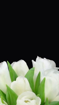 Beautiful wallpaper for your iPhone 8 Plus from Everpix Live💐 Iphone Wallpaper Video, Flower Iphone Wallpaper, Apple Wallpaper, Best Flower Wallpaper, Beautiful Wallpaper For Phone, Colorful Wallpaper, Beautiful Flowers Wallpapers, Motion Wallpapers, Live Wallpapers