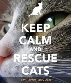 Rescue Groups Keep calm and rescue cats.Keep calm and rescue cats. Rescue Dog Quotes, Rescue Dogs, Kitten Rescue, Cat Quotes, Animal Quotes, Cat Sayings, Qoutes, Crazy Cat Lady, Crazy Cats