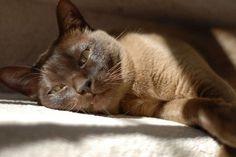 cat in sunlight | Bear Cat in the Sun
