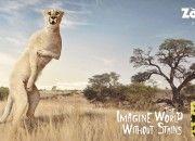 Fuera manchas en la nueva campaña gráfica de 'ZooZoo Napkins:  http://titubear.com/index.php/blog/117-imagina-un-mundo-sin-manchas-por-zoozoo-napkins