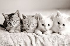 Cutest Kittens!!!!! <3 my favorite pin i've ever posted!!!!!!!