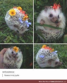 Flowers in my Quills! So cute!