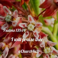 "Psalms 139-14 ""I will praise thee;"" #KingJamesVersion #KingJamesBible #KJVBible #KJV #Bible #BibleVerse #BibleVerseImage #BibleVersePic #Verse #BibleVersePicture #Picture #Pic #Image #KJVBibleVerse #DailyBibleVerse"