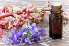 Já experimentou curar a sua vida usando os Florais de Bach? Melhore a sua saúde com o poder transformador das plantas. http://www.eusemfronteiras.com.br/florais-o-uso-de-plantas-na-saude/?utm_content=buffer7c6e1&utm_medium=social&utm_source=facebook.com&utm_campaign=buffer #eusemfronteiras #florais #plantas #saúde #floraisdebach