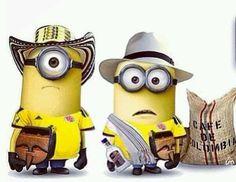 Colombian Minions>>>> this is gold Minion Rock, Cute Minions, Minions Despicable Me, Minions 2014, Minions Pics, Minion Humor, Evil Minions, Minion Pictures, Amor Minions