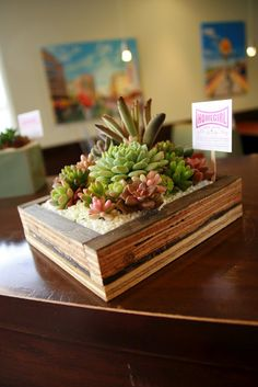 Here are some of our new succulent planters. Growing Succulents, Succulents In Containers, Cacti And Succulents, Planting Succulents, Planting Flowers, Succulent Bonsai, Succulent Gardening, Garden Terrarium, Container Gardening