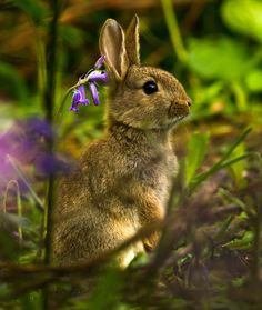 Magical Nature Tour • Rabbit in bluebells by Dulcie Fairweather