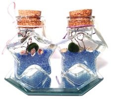 Marimo terrariumWe are all made of stars living by EclecticZen, $25.00