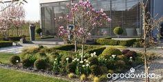 Madżenie ogrodnika cz. aktualna - strona 338 - Forum ogrodnicze - Ogrodowisko
