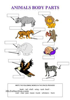 Animal Body Parts - English ESL Worksheets for distance learning and physical classrooms Animal Worksheets, Science Worksheets, Worksheets For Kids, Animal Coverings, Animal Body Parts, Animal Adaptations, English Exercises, Halloween Math, English Lessons