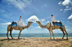 Sweet and cute couple photography +62818935898 selva.evha111186@gmail.com #prewedding bali #preweddingbali #preweddinglombok #engagement #niko hotel prewedding bali camel riding nusa dua #bali #murah #photography #foto familly keluarga #cheap #promotion 3000k or 270 usd up to 4000k or 380 usd all in