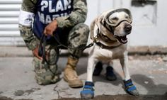 Frida the rescue dog pictured on 10 September.
