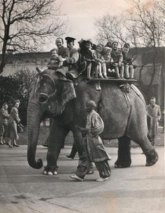 An Elephant Ride at Belle Vue Gardens, Manchester. I took this ride aged 4 with my injured arm in a sling. I gripped the hand bar very tightly! Pre health and safety legislation! Manchester Day, Manchester England, Colorful Elephant, Asian Elephant, Old Pictures, Old Photos, Elephant Ride, Big Animals, Old Trains