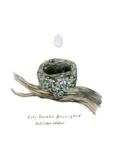artist: Diana Sudyka. Tiny Aviary