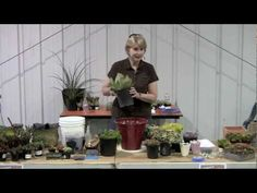 How to Plant a Succulent Container Garden with @debra gaines Lee Baldwin