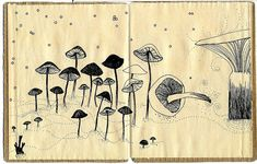 Book of mushrooms 2 by Cecilia Levy