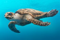 Educational Series: Ocean Animals Are in Crisis and Need Protection Now - Animal Petitions