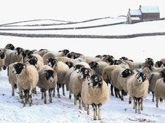 Frozen Flock