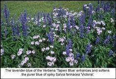 A Cool-Blue Garden