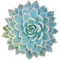 Shop succulents and cactus online! We offer a wide range of healthy, beautiful, and rare cactus and succulents plants shipped directly to your doorsteps. Potting Soil For Succulents, Types Of Succulents Plants, Succulents Online, Purple Succulents, Cacti And Succulents, Planting Succulents, Succulent Gardening, Organic Gardening, Succulent Care