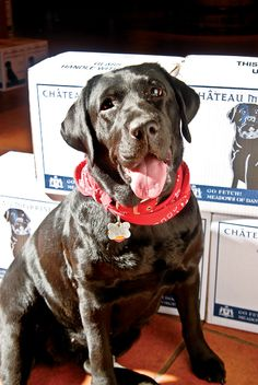 1000 Images About Wine Dogs On Pinterest Wineries Wine