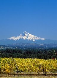 Beautiful Mt. Hood from Hood River, Oregon. My favorite place to go for a drive.