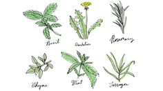 Six common plants that might do a body good  (Eric Hanson / For Los Angeles Times) Basil Basil is the anti-inflammatory rock star of herbs. Not only is it one of the oldest cultivated herbs, dating back 5,000 years in India, but it's also the most versatile, fragrant and tasty of our garden herbs. The active ingredients, called volatile oils,...  http://www.latimes.com/health/la-he-healing-garden-herbs-20150626-htmlstory.html