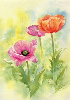 How to Watercolour Poppies